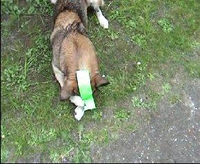 hundKlebeband.jpg